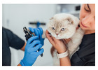 Opt-In Best Veterinarian Email List Providers in USA